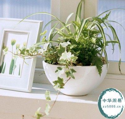 客厅植物摆放风水如何改变运势