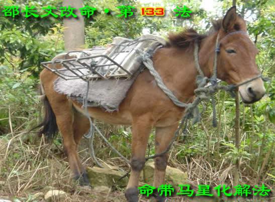 ▌邵长文改命第133法【马命化解】法术篇
