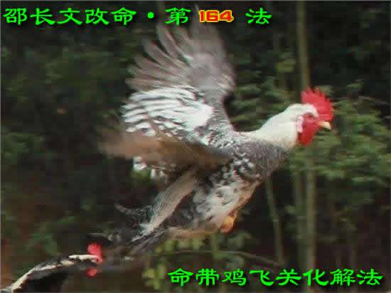 鸡飞关.邵长文改命第164法【鸡飞关化解】法术篇.鸡飞关;鸡