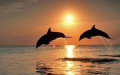 【双鱼情感】讨厌双鱼。没关系,双鱼活着不是为了取悦你。