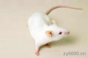 《十二属相》鼠