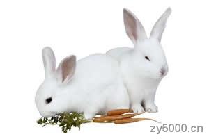 《十二属相》兔