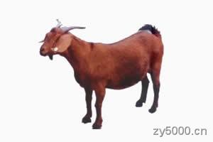 《十二属相》羊